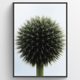Ball plant - plakat wallsticker