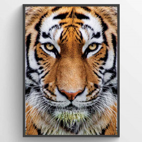 Tiger - plakat wallsticker