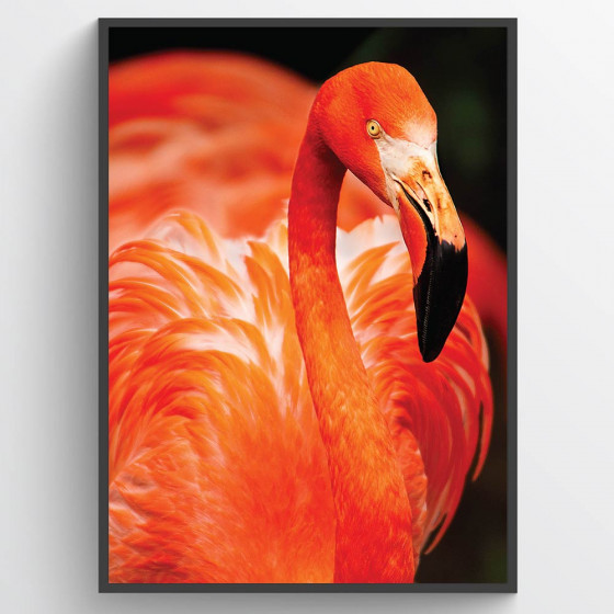 Flamingo plakat wallsticker