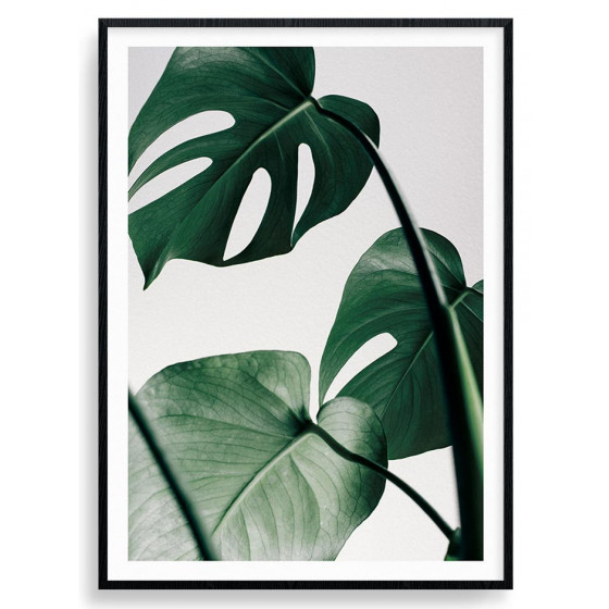 Monstera plante plakat wallsticker