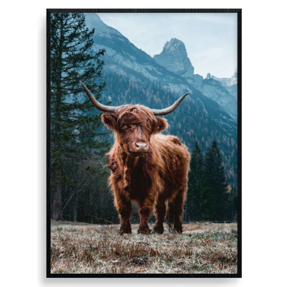 Highland Cow Plakat wallsticker